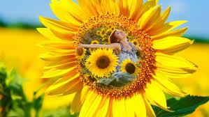 فوائد زهره الشمس