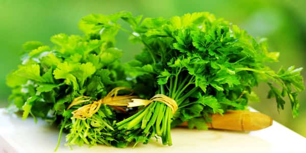 الكزبرة الخضراء والرجيم فوائد الكزبرة الخضراء فى التخسيس والرجيم