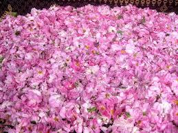 فوائد الورد المجفف للمهبل و للبشرة بالتفاصيل