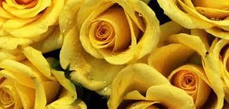 دلائل الورد الاصفر