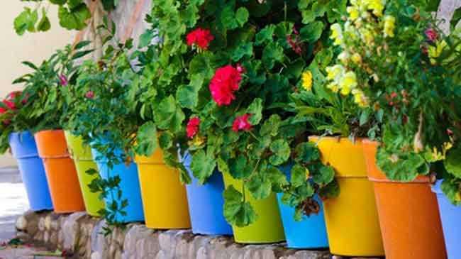 ما هي أنواع النباتات القابلة للزراعة في المنزل