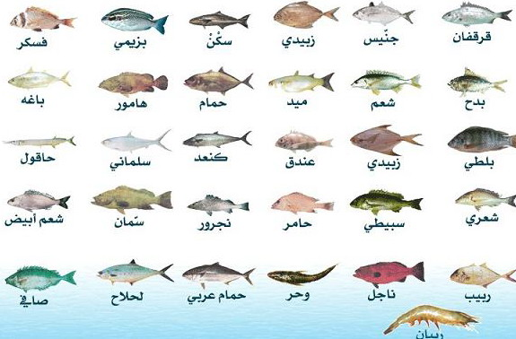 أنواع السمك في الكويت