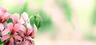 مظاهر تنوع النباتات الزهريه