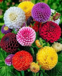 أسماء زهور نادرة – افضل انواع الزهور اسماء ورود نادرة