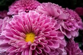الفرق بين الزهور والورود