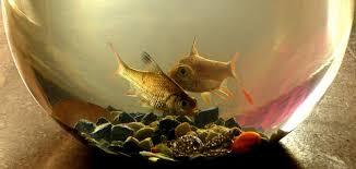 كيفية الاعتناء بأسماك الزينة