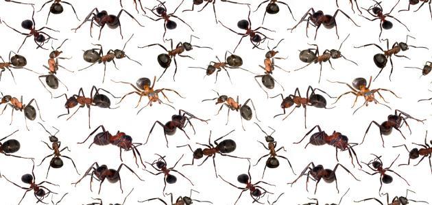 كيف تتخلص من النمل