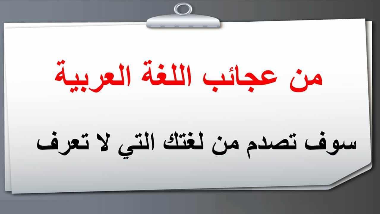 عمر بالفرس مراسلة عبارات