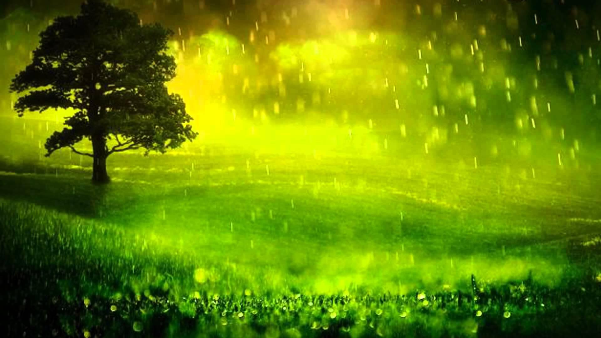 تفسير حلم رؤية الغابة في المنام لابن سيرين