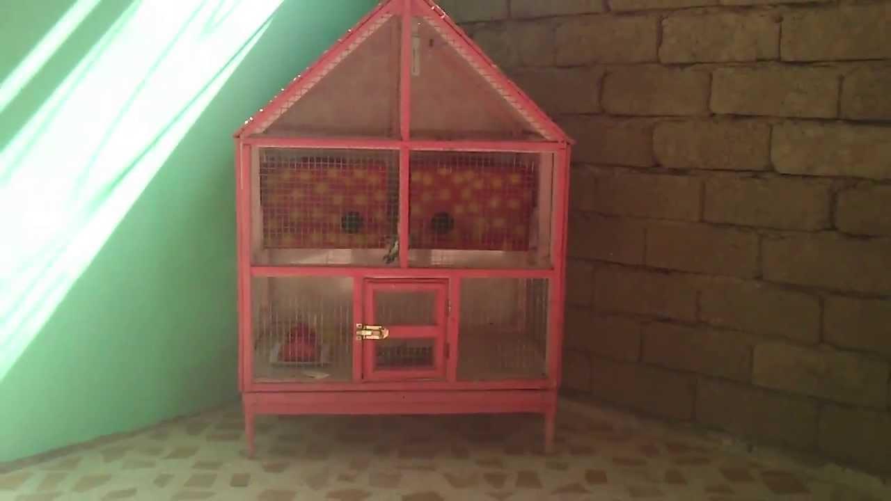كيف تصنع بيتآ للطيور