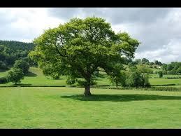 بحث حول فوائد الشجرة