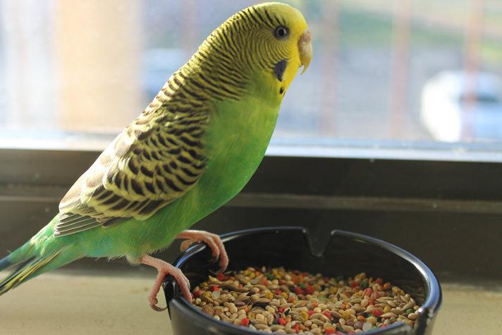 ماذا تأكل الطيور