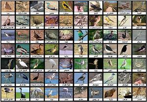 أنواع الطيور وأسماؤها – اسماء الطيور الزينة واشكالها