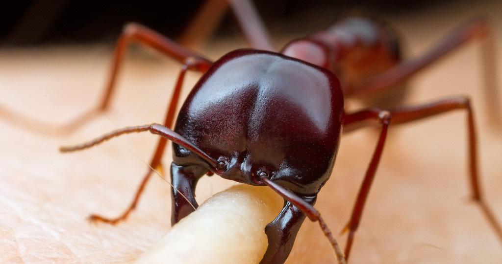 صور النمل عن قريب