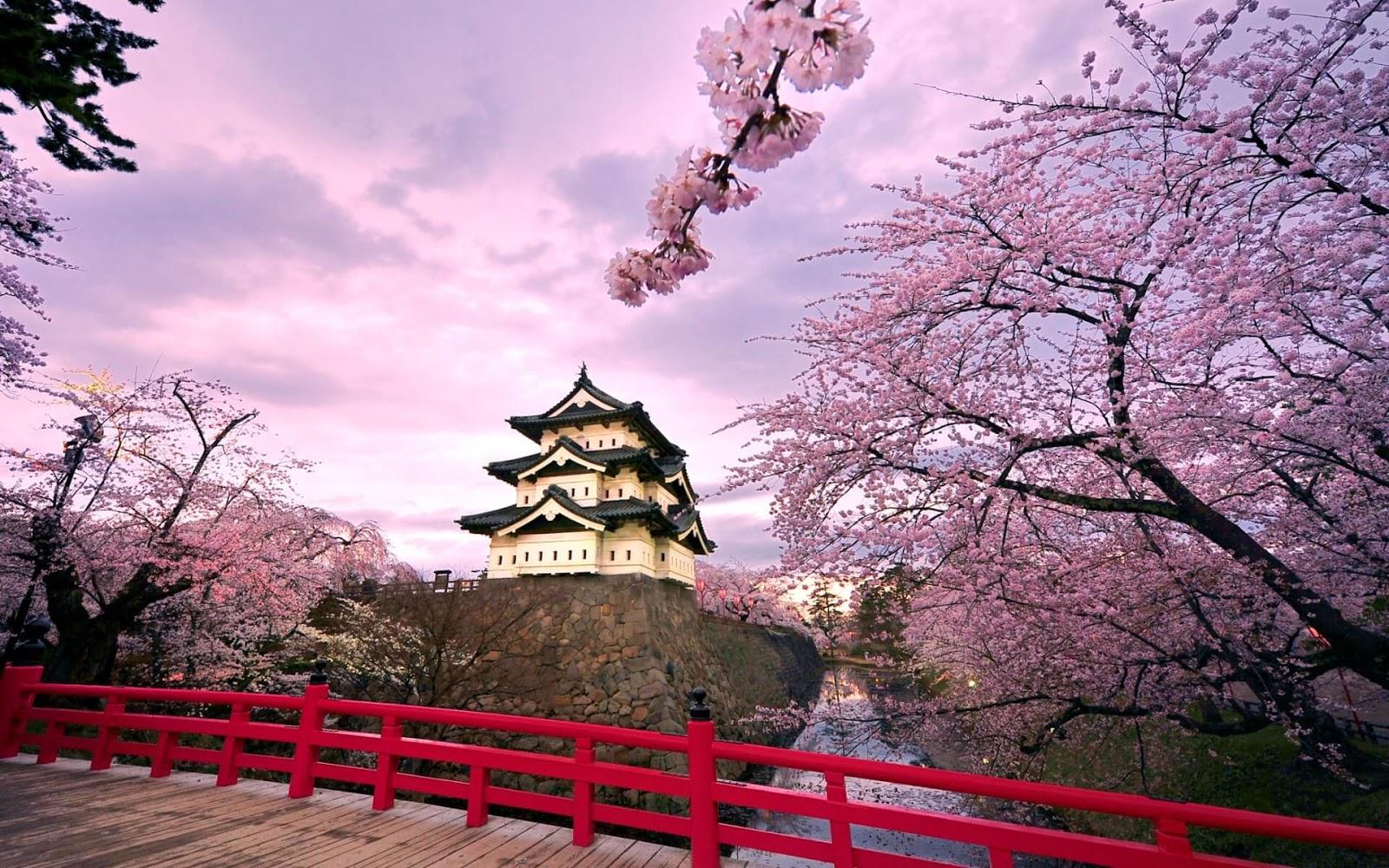 صور لشجرة الكرز اليابانيه