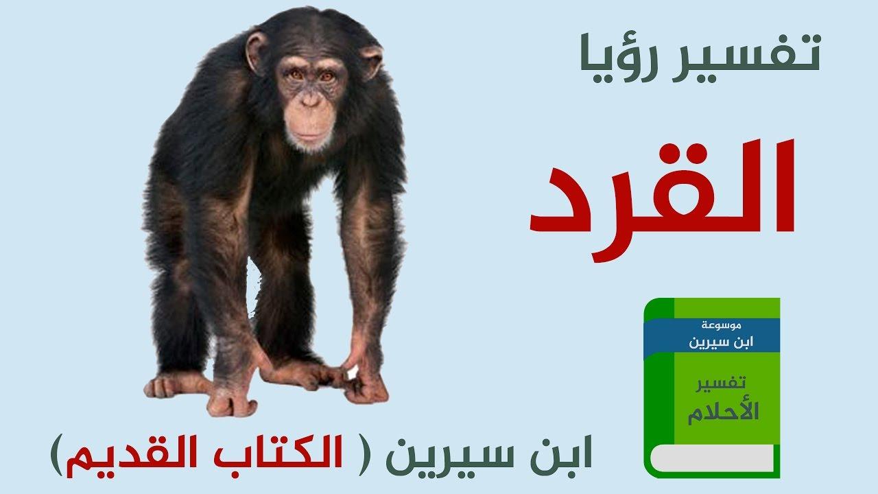 تفسير حلم رؤية القرد فى المنام لابن سيرين والنابلسي