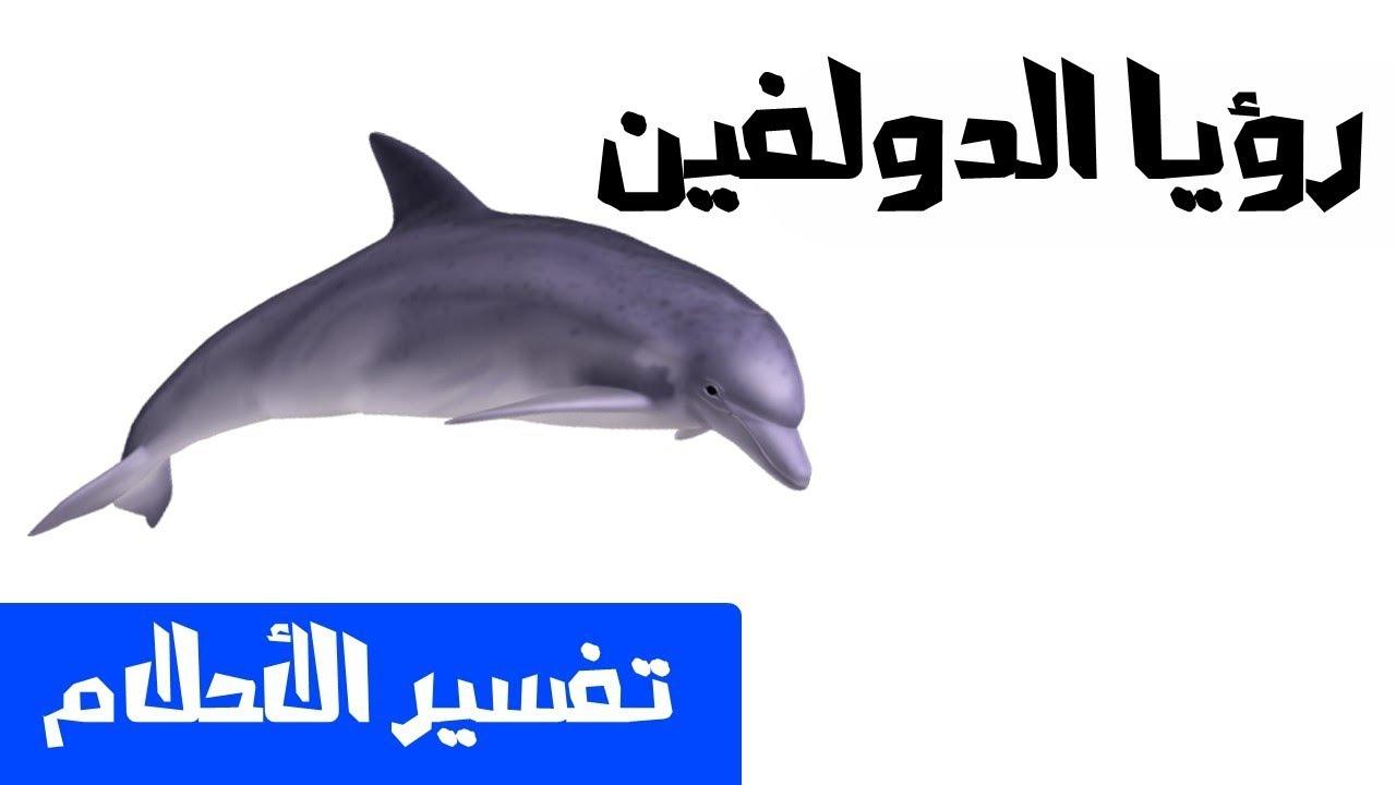 تفسير حلم رؤية الدلفين فى المنام