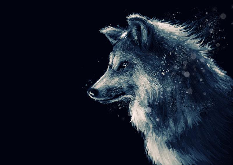 تفسير حلم رؤية الذئب فى المنام