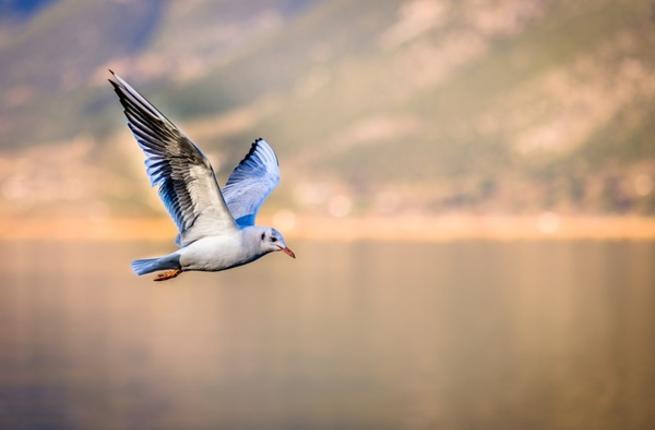 تفسير حلم رؤية طيور النورس في المنام