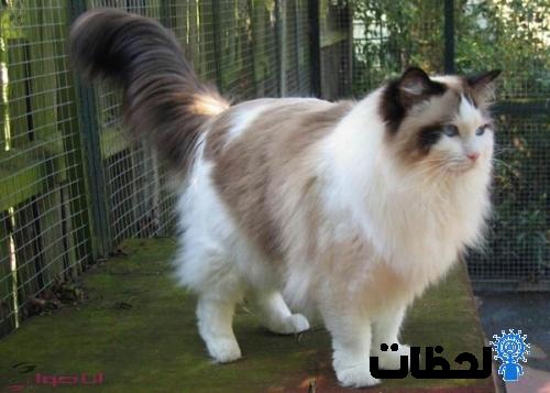 صور قطط جميلة
